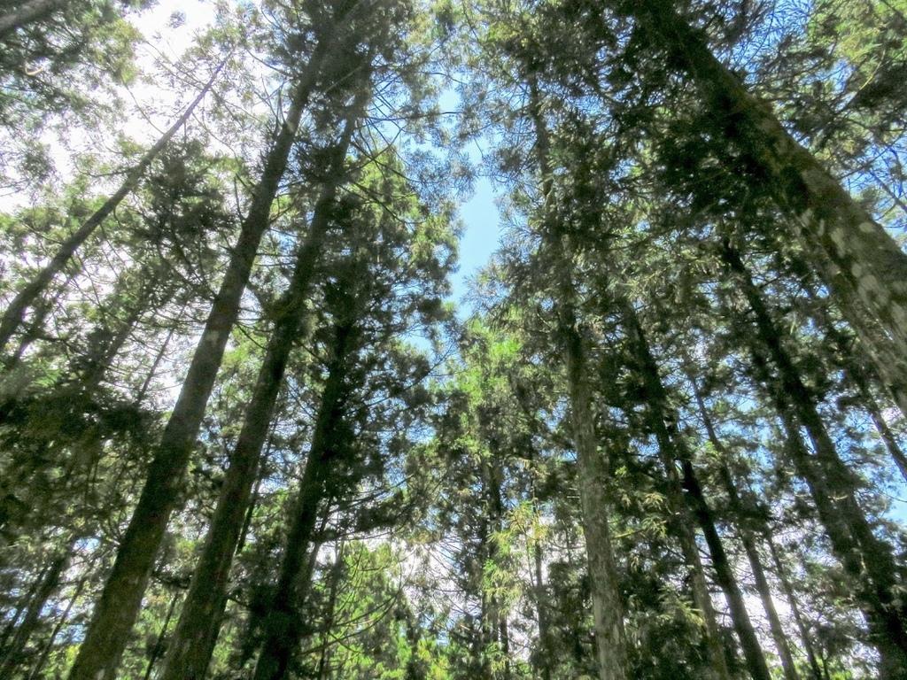 福山植物園014.jpg