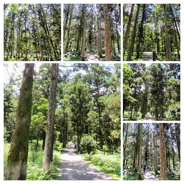 福山植物園015.jpg