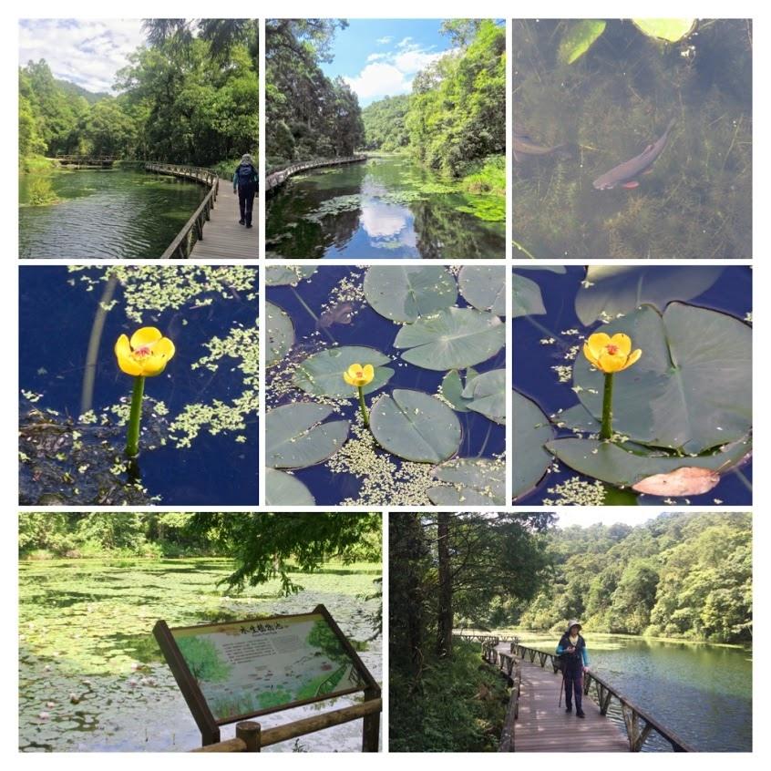 福山植物園010.jpg