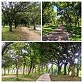 大安公園015.jpg