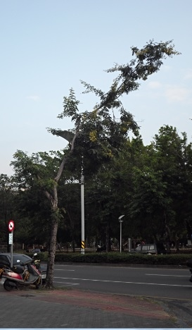 歪樹.jpg