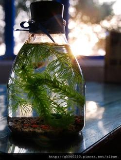 生態魚瓶.jpg