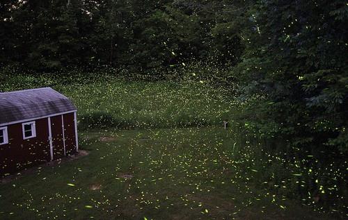 台中螢火蟲