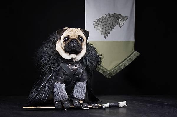 cute-pugs-game-of-thrones-pugs-of-westeros-2.jpg