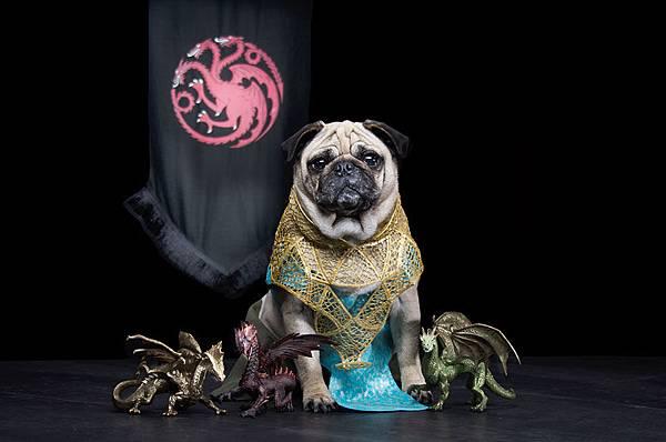 cute-pugs-game-of-thrones-pugs-of-westeros-4.jpg