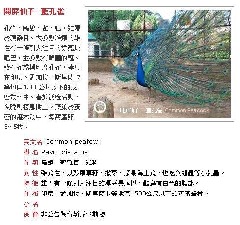 藍孔雀.JPG