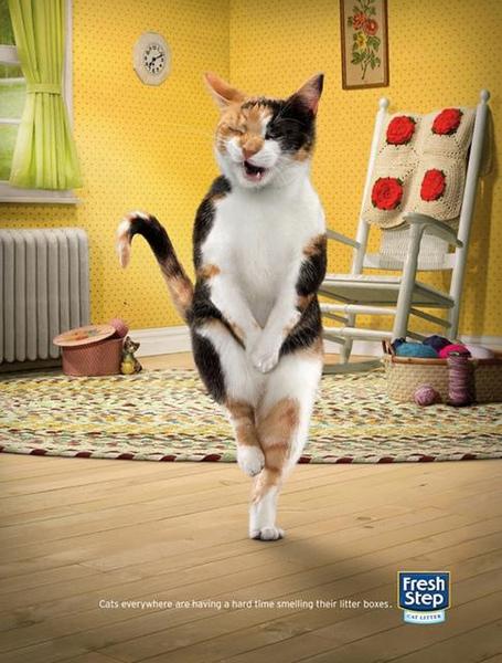 legged cats (2)-1.jpg