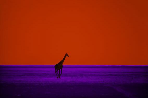 Pete Turner.jpg