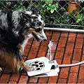 doggie-fountain-5