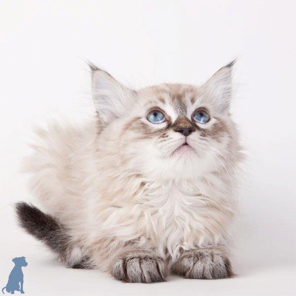 sheltercats (1)