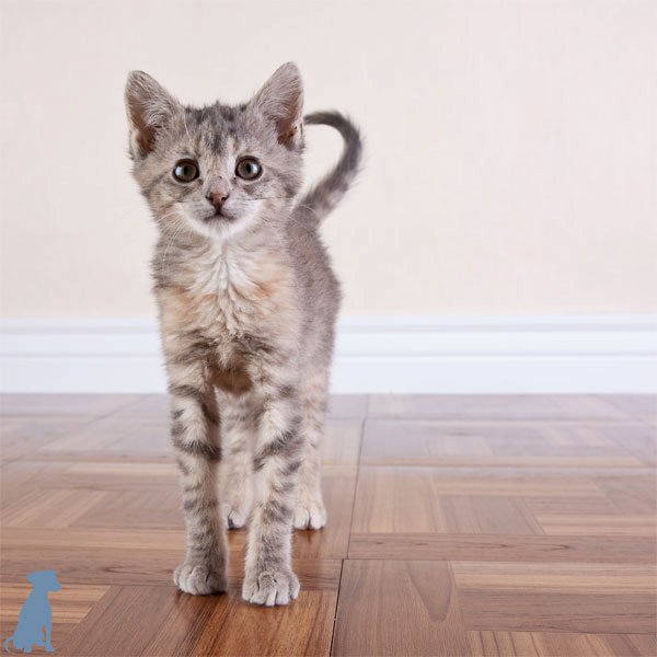 sheltercats (2)