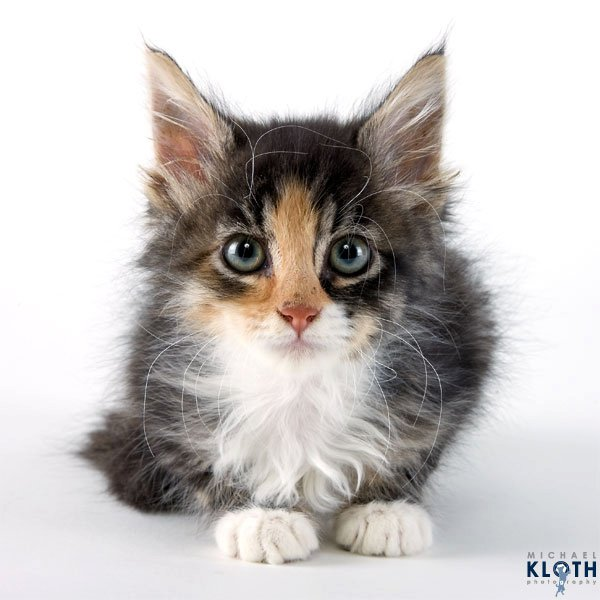 sheltercats (5)