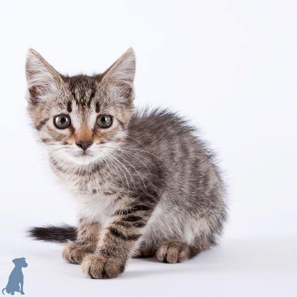 sheltercats (8)