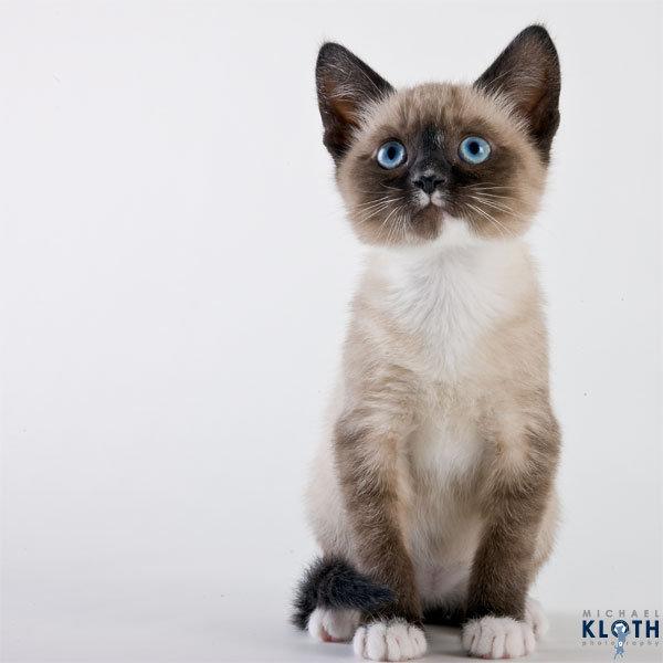 sheltercats (6)