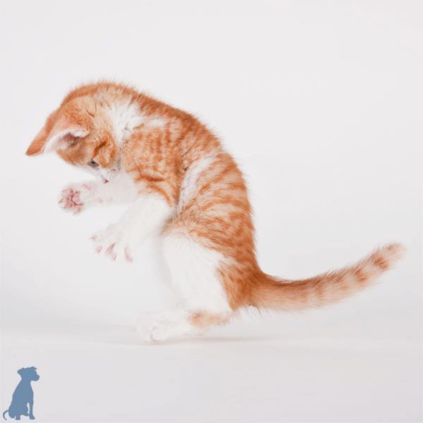 sheltercats (7)