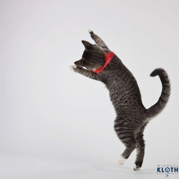 sheltercats (10)