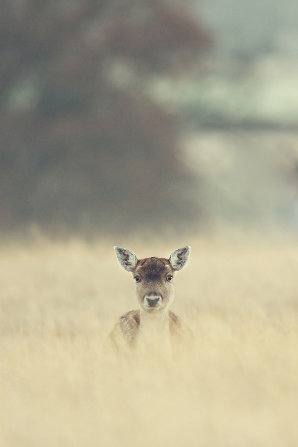deer-in-the-grass-by-mark-bridger-south-east-london-2012.jpg