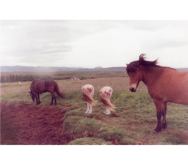 2webhorses.jpg