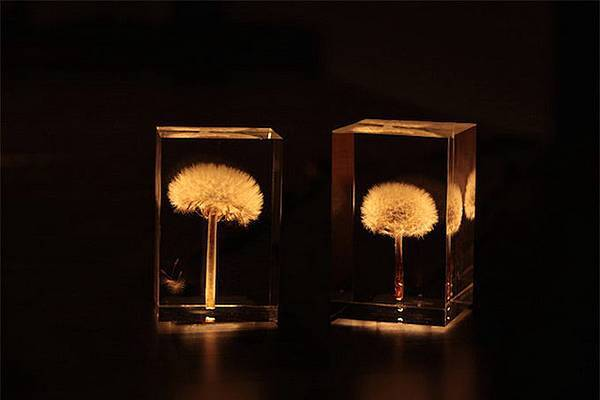 dandelionlight-1.jpg