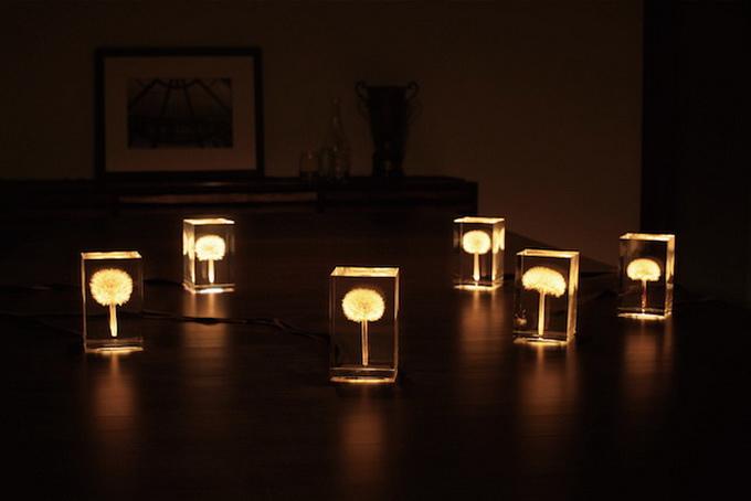 dandelionlight-2.jpg