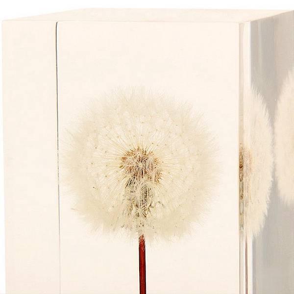 dandelionlight-4.jpg
