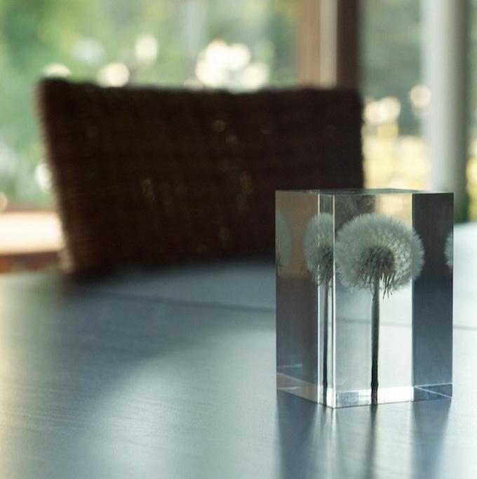 dandelionlight-5.jpg