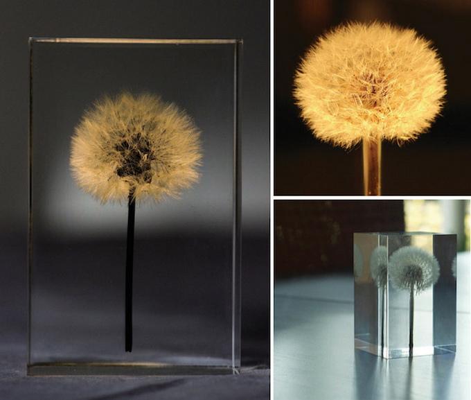 dandelionlight-6.jpg
