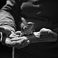Tytia_Habing_BlueBird.jpg