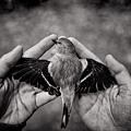 Tytia_Habing_Fly.jpg