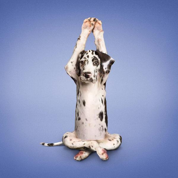 YogaCats09.jpg