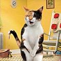 legged cats-1.jpg