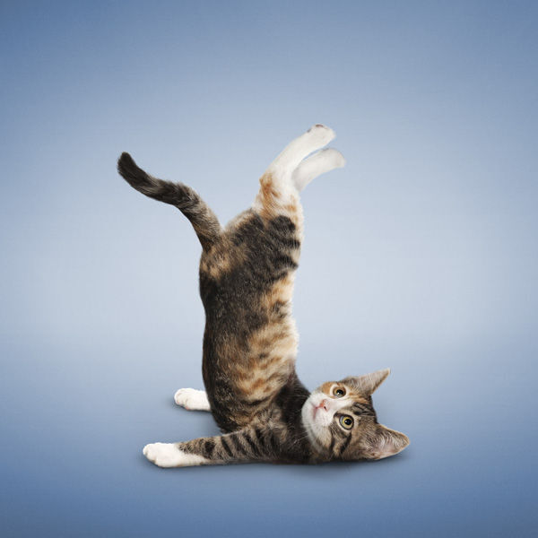 YogaCats03.jpg