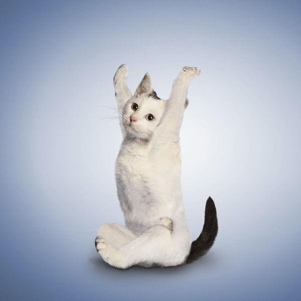 YogaCats02.jpg