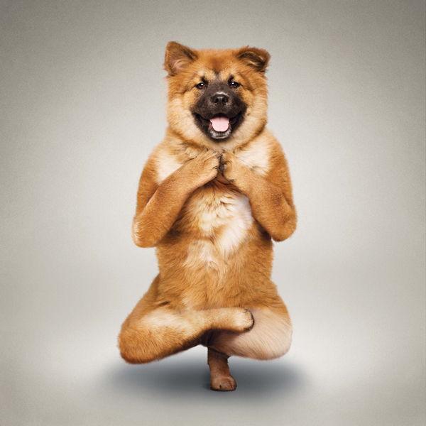YogaCats08.jpg