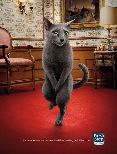 legged cats (3)-1.jpg