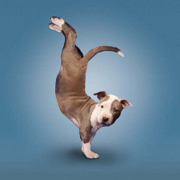 YogaCats14.jpg