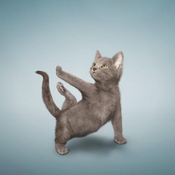 YogaCats00.jpg