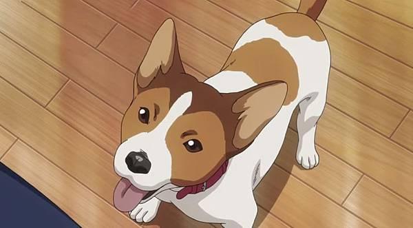 瀧澤政道的狗.JPG