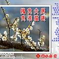 NewYearCard2011.jpg