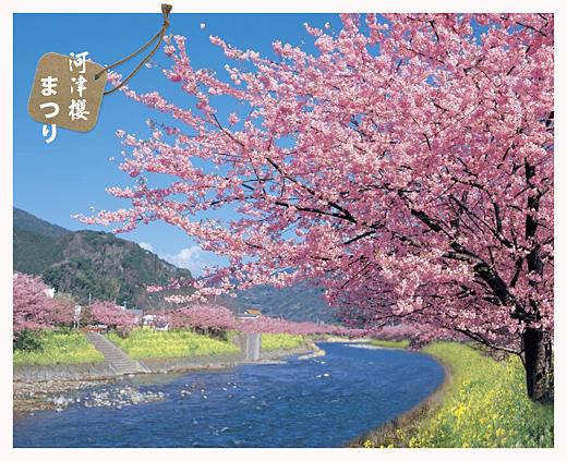 河津櫻封面2.jpg