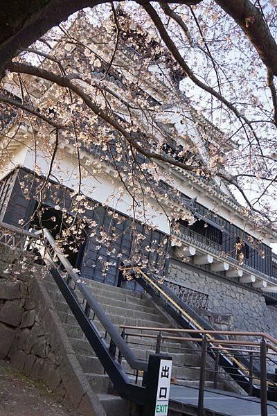 0406-2012.0327~0331九州春櫻5天~熊本城櫻花美,大家一起留下紀念合照