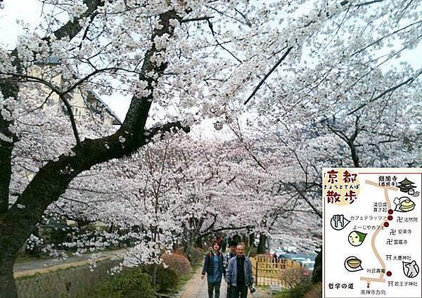 0410-【京都‧哲學之道】梨真實況報導:櫻花盛開囉!哲學之道南從若王子神社,北到銀閣寺,長約1.5公里的散策步道。一到春天兩旁種植櫻花盛開,好美