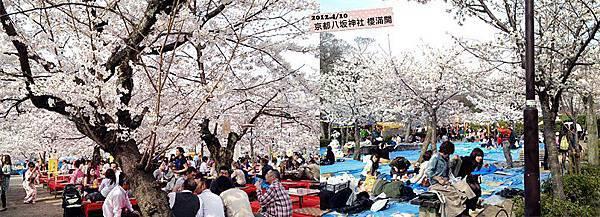 0411-【現場連線‧櫻花】領隊順博在京都八坂神社拍下櫻花滿開最美の一瞬!在櫻花樹下聊天拍照,春神來了~