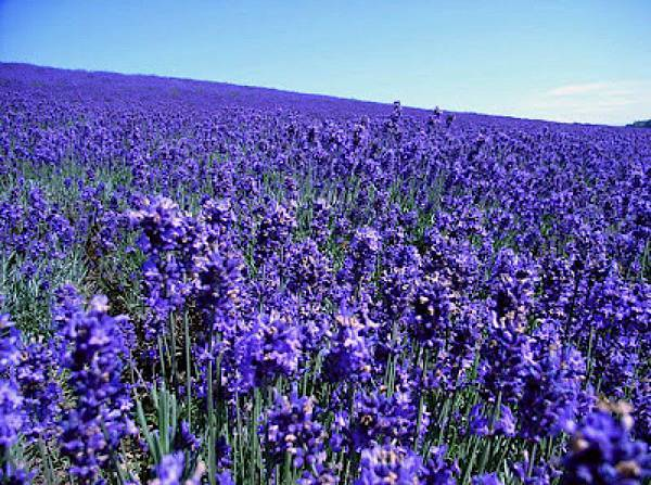北海道的魅力或許就是來自於它是個一年四季都好美的國度,而且不管幾度探訪都不會厭倦,你喜歡哪一個季節的北海道呢?