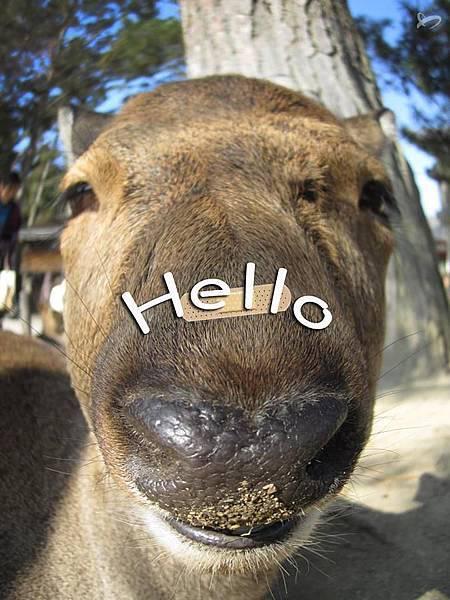 【Hello everyone】今天天氣好好~出去曬曬太陽吧!好舒服喔♥ 我是住在奈良公園裡的小鹿,今天用我的大頭狗風格和大家打招呼喔!