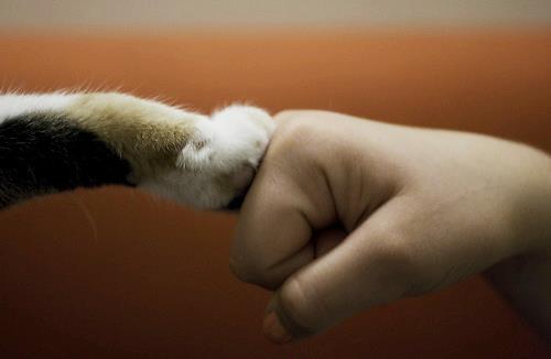 【今日も頑張ろう】早安,今天也加油喔!Fighting~~♥