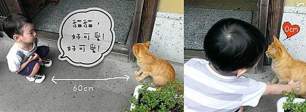 2歲陳小弟與黑川溫泉貓咪的互動。