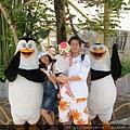 和企鵝拍照