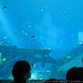 好美的水族館