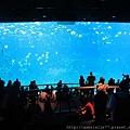 超大的水族館